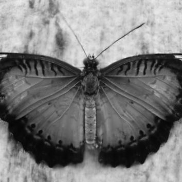 Butterfly macro black and white Photography wall art home decor print