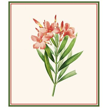 Oleander Flowers Inspired by Pierre-Joseph Redoute Counted Cross Stitch Pattern