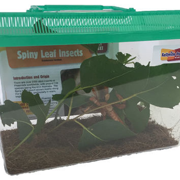 Spiny Leaf Insect KIT