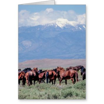 Wild Horses Out West Greeting Card