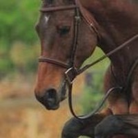 Antares Hunter Bridle - Hunter/Jumper Bridles from SmartPak Equine