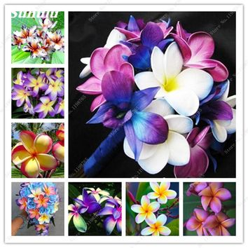 200 Pcs Plumeria Frangipani Hawaiian Lei Flower Seeds Rare Exotic Egg Flower Seeds Beauty Your Garden Wedding Party Decoration