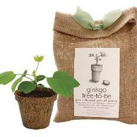 GINKGO TREE TO BE KIT | Ginkgo Biloba Tree Planting Kit For Remembering Special Moments And Milestones | UncommonGoods