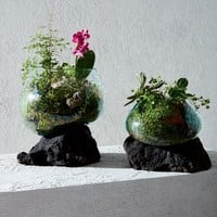 Lava Rock Form Terrariums