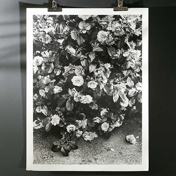 Debbie Carlos Black And White Flowers Art Print | Urban Outfitters