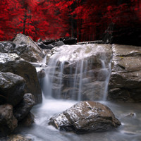 Red Vision Photographic Print by Philippe Sainte-Laudy at Art.com