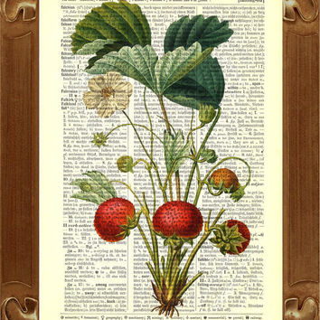 Vintage  Strawberries Print Botanical illustration  Upcycled Dictionary Page Recycled Book Art Upcycled Art Print Upcycled Book Print