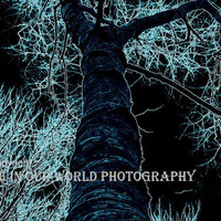 8x11 Baby Blue Tree Xray on Black Matted photo by MeInOurWorld