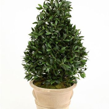 4.5' Laurel Pear-Shaped Topiary In Natural Stone-finish Terra Cotta Garden Pot