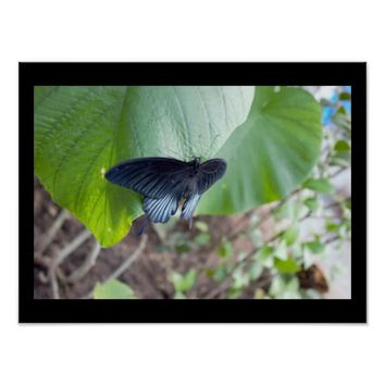Black Butterfly on Plant Poster