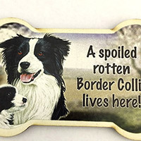 Border Collie Dog Magnet, A Spoiled Border Collie Lives Here! Bone Shaped Fridge Magnet