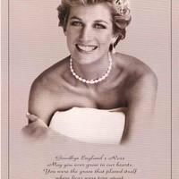 Princess Diana England's Rose Tribute Poster 23x35