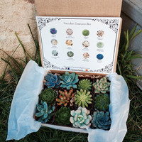 Succulent Treasures Candy Box. Dozen Assorted Premium succulents gift box
