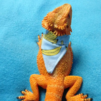 FREE SHIPPING Option! Beardie BANDANAS add Panche and Fun to your Reptiles Accessories