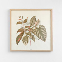 SALE -35% leaves & plants composition - poster - 50cm x 50cm LPC5050