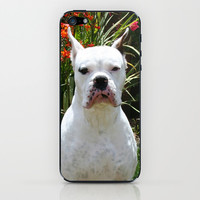White Boxer Dog iPhone & iPod Skin by ritmo boxer designs