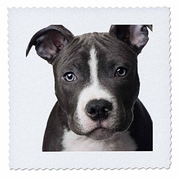 3dRose qs_4240_4 American Pit Bull Terrier Puppy-Quilt Square, 12 by 12-Inch