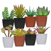 Bulk Flowers and Bushes at DollarTree.com