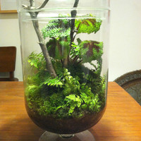 Unique Woodland Themed Terrarium in a Huge Footed Jar