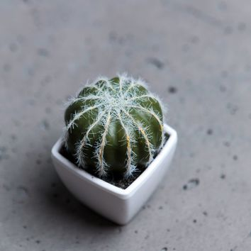 Round cactus - DECORATION - WOMAN | Stradivarius United Kingdom