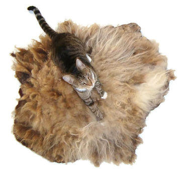 Wool Cat Bed Sheep-friendly Pet Bed Felted Fleece Rug - Moorit Shetland - Supporting American Small Farms
