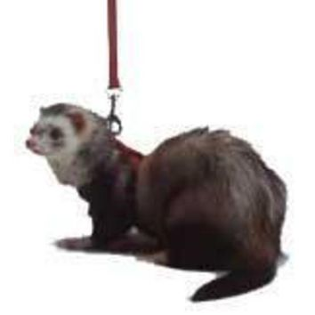 DCCKU7Q Ferret Harness-Lead Set Red X