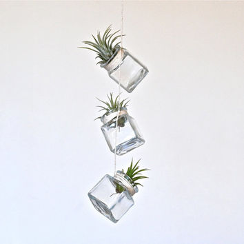 Very Mini Floating Air Plant Glass Square Trio, Modern Minimalist Hanging Air Plant Terrariums, Geometric Terrariums,Hanging Air Plant Vases