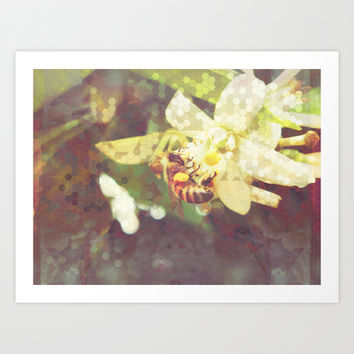 Honey Bee: Pearl Art Print by Ben Geiger