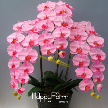 New Arrival!100 Pcs/Bag Pink Phalaenopsis Seeds Potted Indoor Flowers Bonsai Four Seasons Orchid Seeds,#RQX6YB