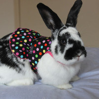 Pet rabbit harness dress with d-ring attachment for a leash . Made to order .