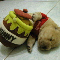 dog costumes winnie the pooh - Google Search