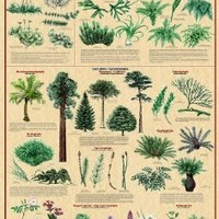 (24x36) Plant Kingdom 2 Educational Science Chart Poster