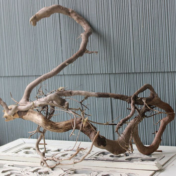 Tangled Driftwood Root Sculpture , Surf Tumbled Beach House Art , One of a Kind Decor