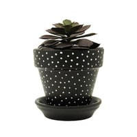 Succulent Planter, Terracotta Pot, Plant Pot, Flower Pot, Indoor Planter, Succulent Pot, Polka Dot Planter, Black Planter, Mini Planter