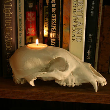 skull candle holder - black bear replica skull tea light holder halloween