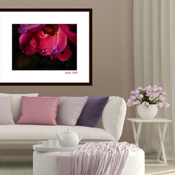 Floral Photography Rose,Roses,deep pink,fuchsia,dramatic home decor,crimson,raindrops on rose petals,roses at sunset,romantic print,closeup