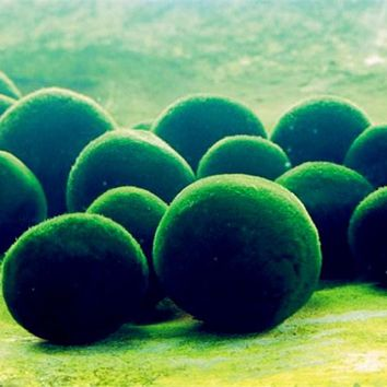 500Pcs Aquarium Moss Bonsai Moss Seeds Lovely Moss Ball Decorative Grass Seeds Ornamental-plant Potted DIY Home Garden Plant