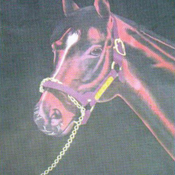 Horse Portrait 508 - 50x60 Fleece Throw - Free Shipping in the Continental US!