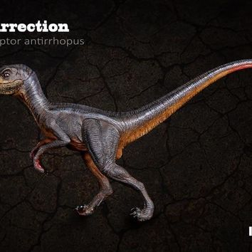 ITOY The Dinosaur Toy Model of Ancient Biological Resurrection Series Velociraptor Antirrhopus