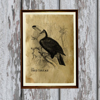 Toco toucan print Old paper Antiqued decoration vintage looking 8.3 x 11.7 inches