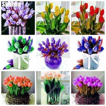 New Rare Purple Tulip True Beautiful Flower (not Tulip Bulb) Bonsai Natural Growth Plants for Home Garden Planting 100 pcs/ bag
