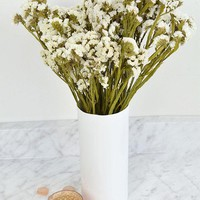 "Preserved Statice Bundle in White - 4 oz Bunch - 13""-16"" Tall"