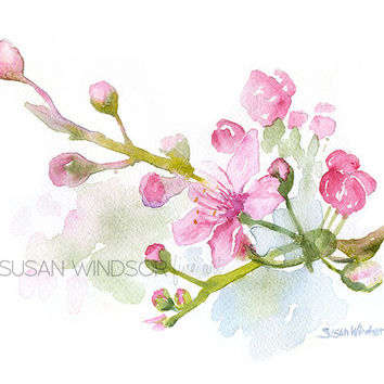 Cherry Blossoms Watercolor