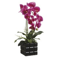 Purple Orchid in Ceramic Block Pot