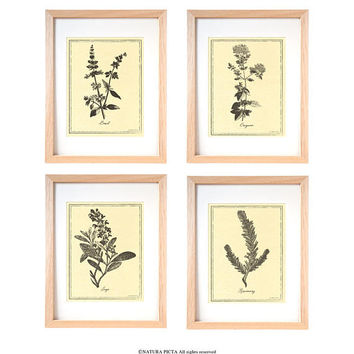 Kitchen herbs wall art set of 4-herbs prints-kichen wall art-botanical print-herbs spices wall art-home decor-riustic print-by NATURA PICTA