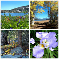 NATURE Photo Prints, Custom Orders, Photographic Art, 4 Scenes, Large Prints, 4 Sizes
