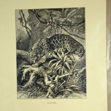 Jaguar Wood Engraved Print  1880s Animate Creation Antique Victorian Era - Ready to Mat and Frame Jungle Cat