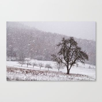 Old pear tree on a wintery meadow Canvas Print by Pirmin Nohr