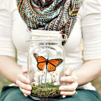 Butterfly Terrarium Kit, Real Butterfly Dry Terrarium in Glass Jar, Field of Flowers