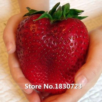 100 seeds/pack Rarest Heirloom Super Giant Japan Red Strawberry Organic Seeds,Sweet Juicy Fruit Free Shipping